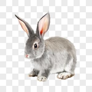 灰兔兔子动物宠物可爱手绘元素图片