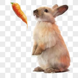 黄兔兔子胡萝卜可爱宠物动物手绘元素图片