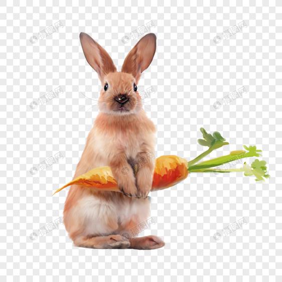 兔子黄兔胡萝卜宠物动物可爱手绘元素图片