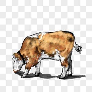 卡通动物牛插图图片
