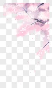樱花树花瓣飘落图片