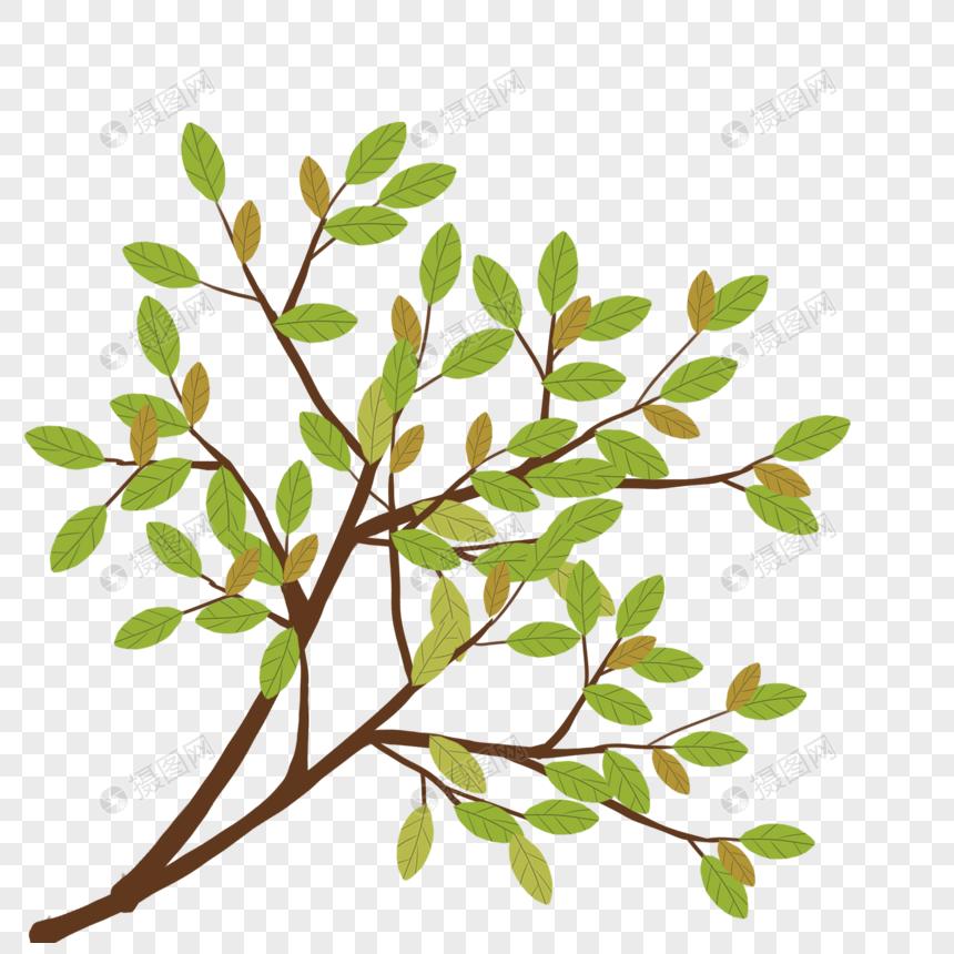 树枝树叶图片