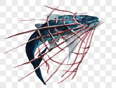 被束缚的鱼图片