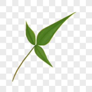绿色竹叶图片