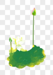 夏至白色荷花花苞水彩插画元素手绘图片