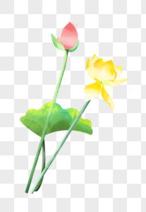 夏至黄色荷花粉色花苞水彩插画元素手绘图片