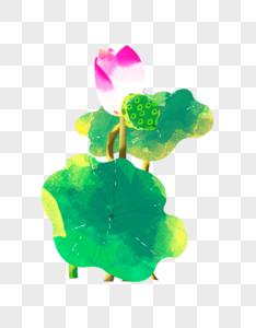 夏至粉色荷花花苞水彩插画元素手绘图片
