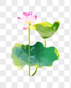 夏至粉色荷花盛开水彩插画元素手绘图片