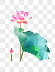 夏至粉色荷花盛开单片荷叶水彩插画元素手绘图片