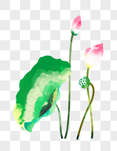 夏至荷花花苞莲蓬荷叶水彩插画元素手绘图片