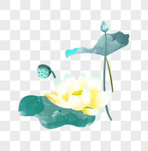 夏至荷花盛开多片荷叶水彩风格插画元素手绘图片