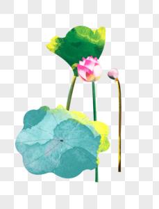 夏至荷花盛开花苞多片荷叶水彩风格插画元素手绘图片