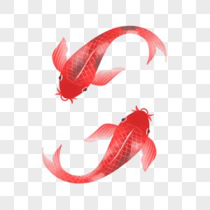 一对红鲤鱼图片