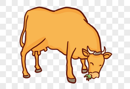 吃草的牛图片