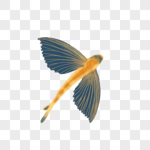 飞鱼元素图片
