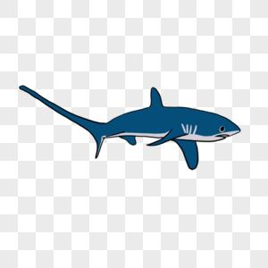 长尾鲨元素图片