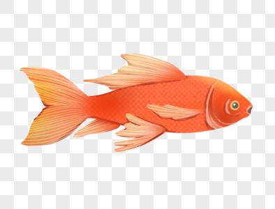 龙凤锦鲤鲤鱼图片