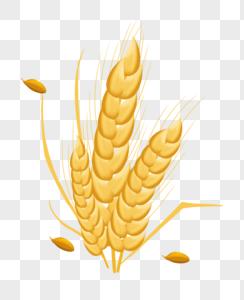 小麦成熟了图片