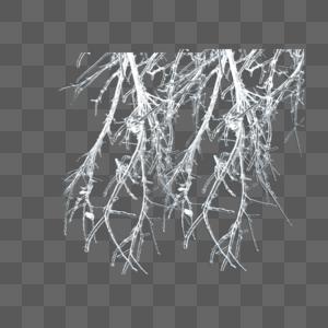 树枝形冰霜图片