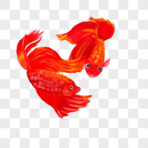 红色的鱼图片