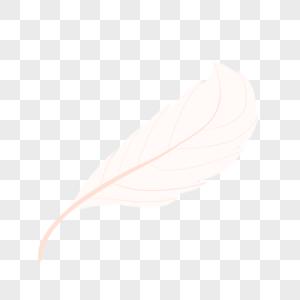 白羽毛图片
