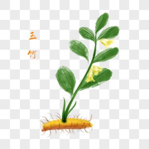 卡通植物玉竹插图图片