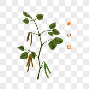 卡通植物赤小豆插图图片
