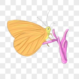 蝴蝶和花图片
