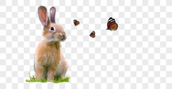 兔子荷兰兔蝴蝶可爱宠物动物黄兔萌手绘元素图片