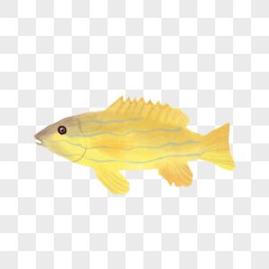 水彩鱼图片