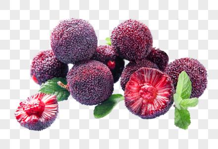 杨梅水果图片