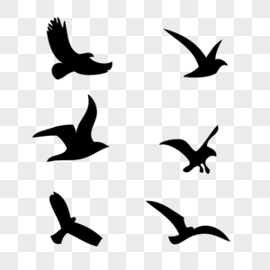飞翔 鸟  燕子图片