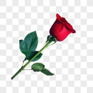 玫瑰花装饰元素图片