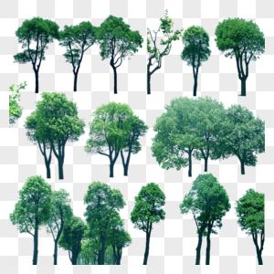 高清树木组装饰图案图片