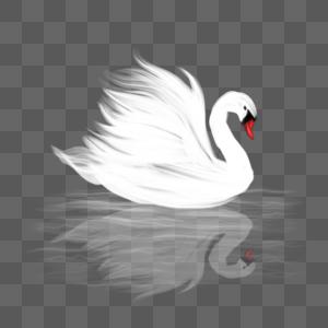 创意火焰白色天鹅图片