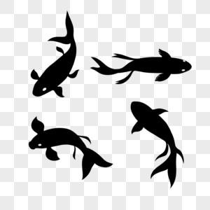 游动的鱼鲤鱼图片