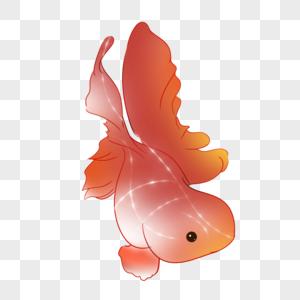 大尾巴金鱼图片