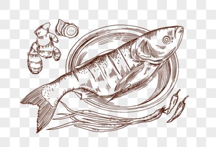 鱼鱼肉姜辣椒葱海鲜食材烹饪手绘线描插画图片