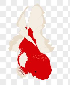 大尾金鱼图片