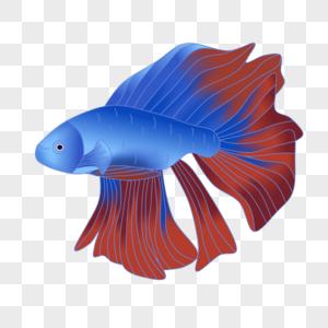 蓝色大尾巴鱼图片