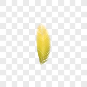 明黄色渐变羽毛图片