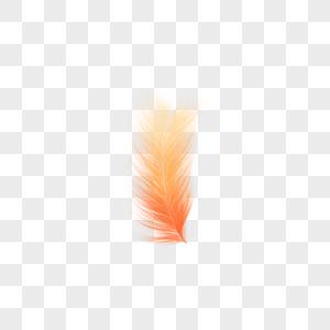杂乱的橙色羽毛图片