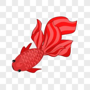 红色大尾巴金鱼图片