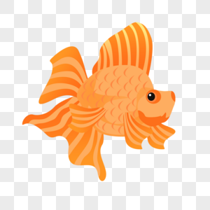 橙色大尾巴鱼图片
