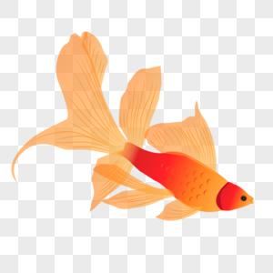 大尾巴鱼图片