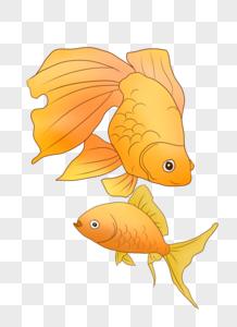 黄色大尾金鱼图片