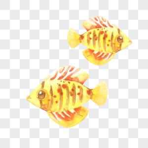 水彩海鱼图片