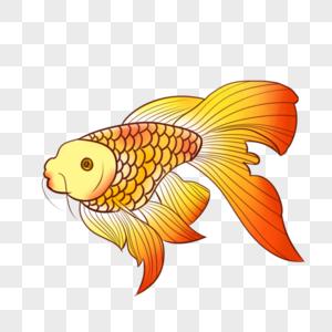 红色大尾鱼图片