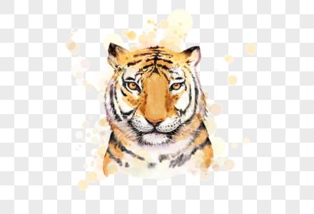 老虎野兽动物彩绘元素图片