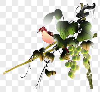 水墨葡萄麻雀图片